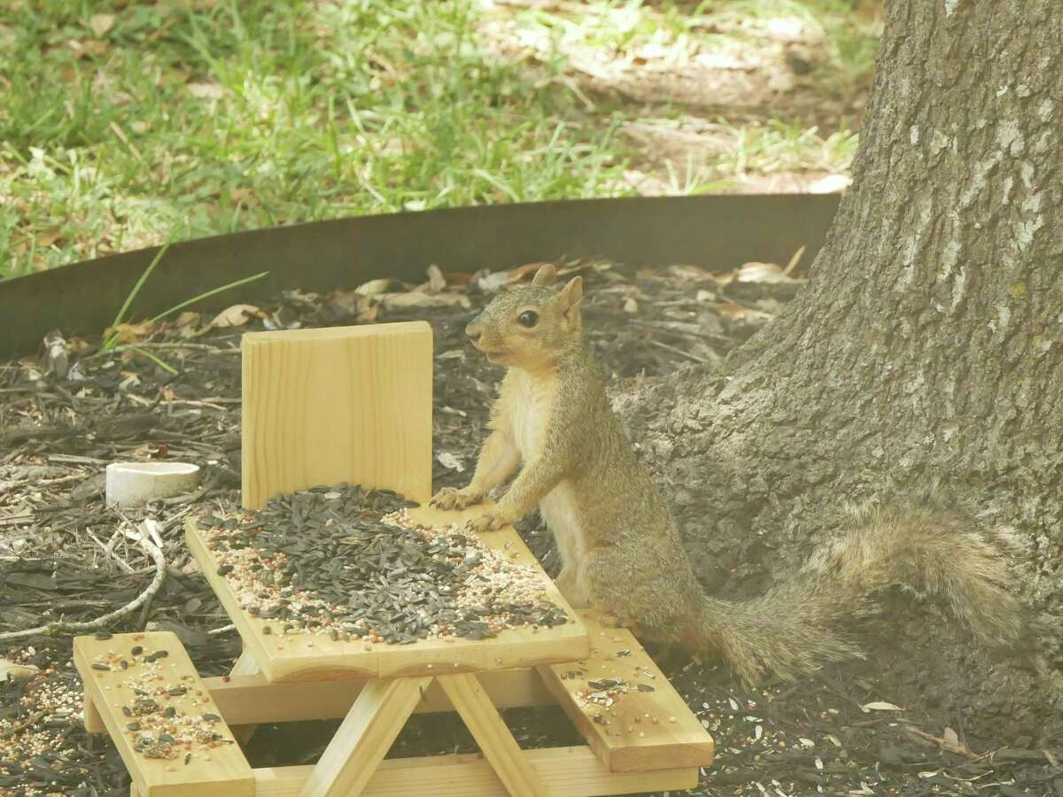 Kate Boysen in San Antonio makes miniature picnic tables for squirrels. She started making the mini tables in May 2020.