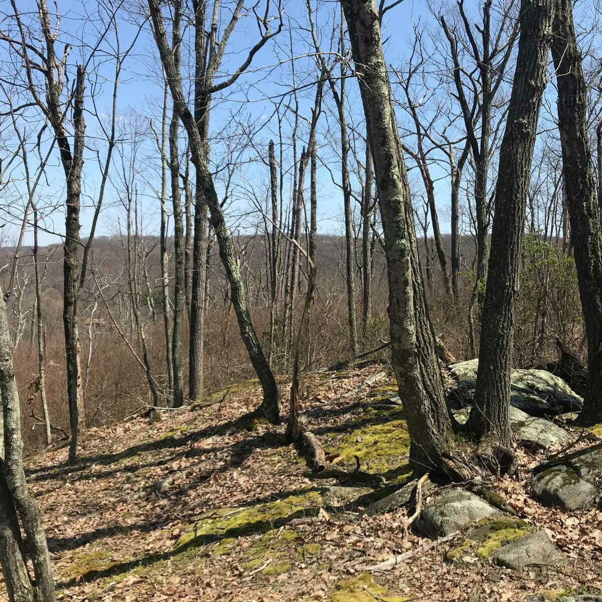 The purchase of 14 acres of woodlands off Bear Mountain Road as open space was approved by Ridgefield voters a July 15 town meeting.