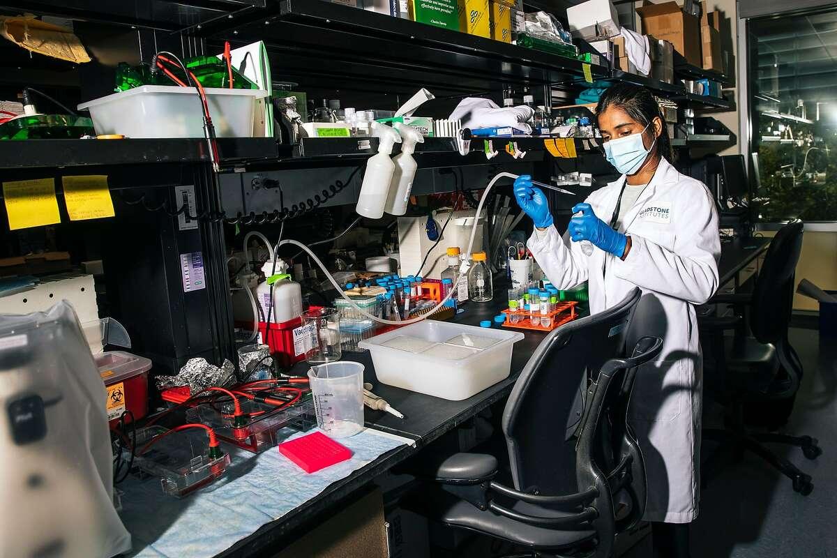 Trupti Patil, especialista asociado del Instituto de Biociencia Cuantitativa de la UCSF, realiza investigaciones sobre el virus en Krogan Lab.
