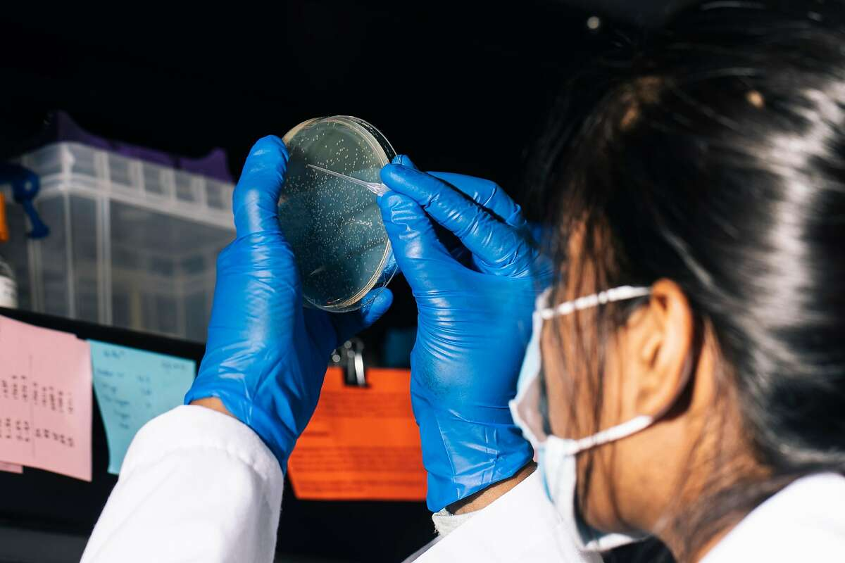 Trupti Patil, an associate specialist at the UCSF Quantitative Biosciences Institute, isolates plasmid DNA from a petri dish at the Krogan Lab inside the UCSF-affiliated Gladstone Institute on Wednesday, July 15, 2020 in San Francisco, Calif..