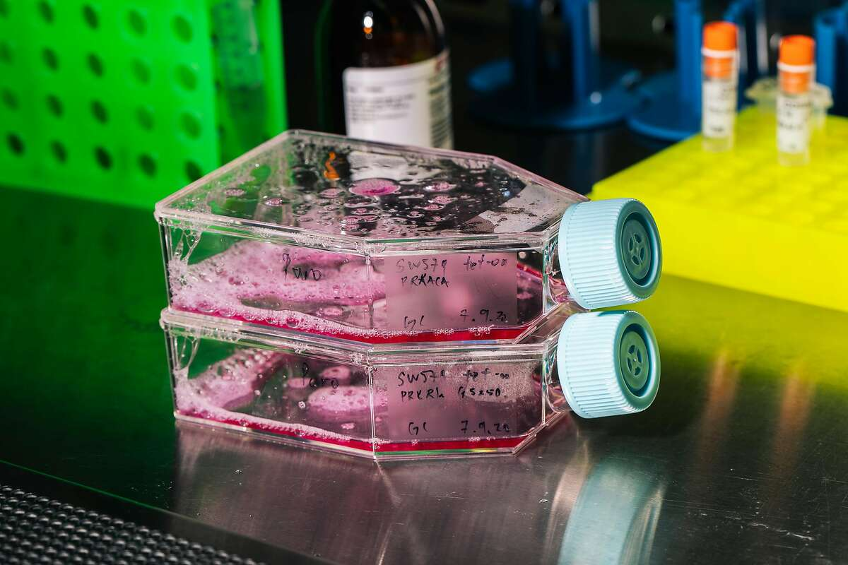 Flasks of cell growth medium are seen under a ventilated hood in a tissue culture room at the Krogan Lab inside the UCSF-affiliated Gladstone Institute on Wednesday, July 15, 2020 in San Francisco, Calif..