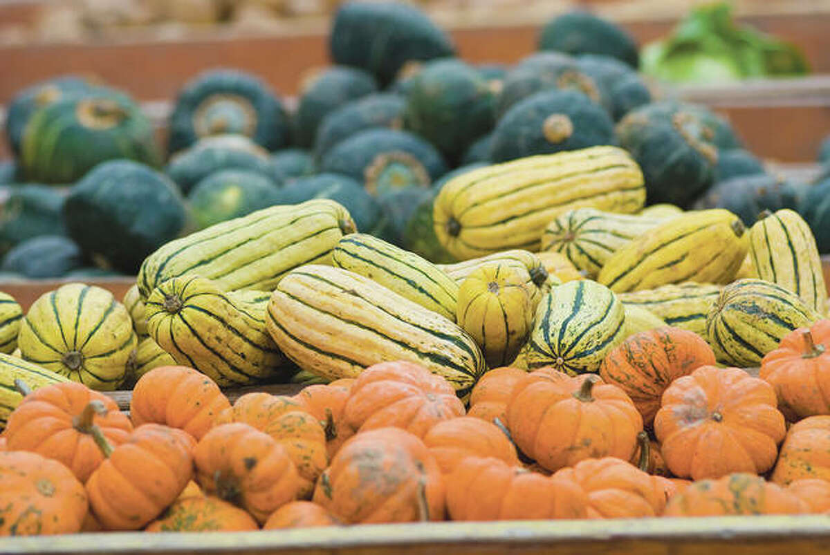 Winter squash can be harvested when the fruit has turned a deep color.