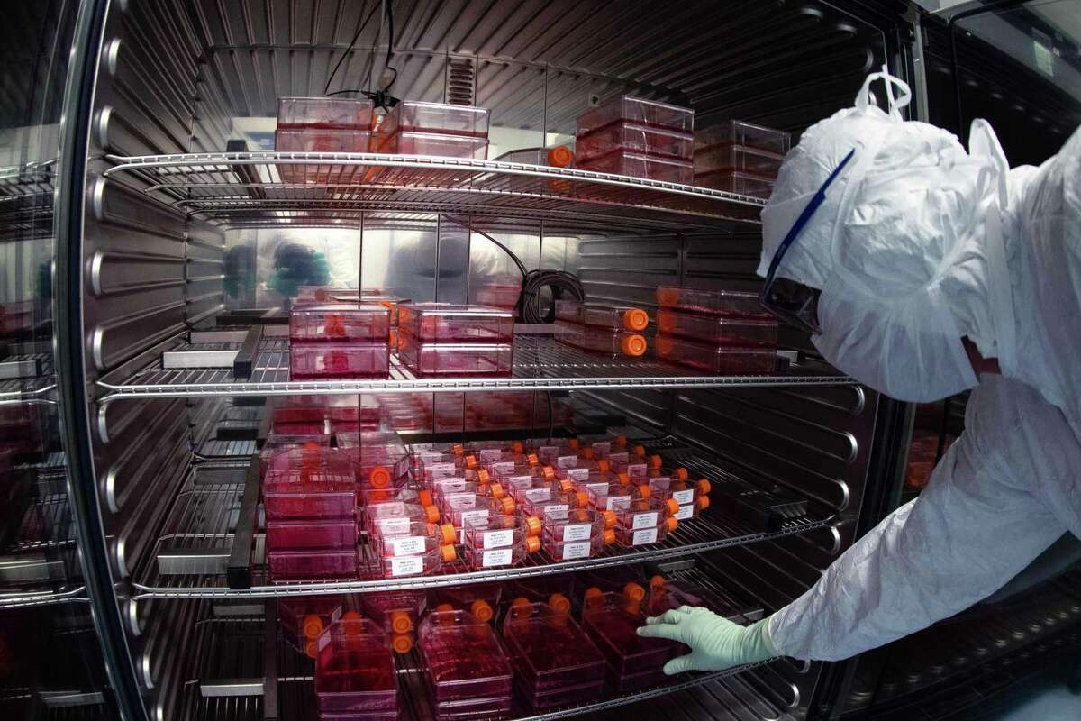 """A lab technician wearing Personal Protective Equipment (PPE) takes reagent bottles to perform vaccine tests at a French pharmaceutical company Sanofi's laboratory in Val de Reuil on July 10, 2020. Monitoring for side effects After licensing, a vaccine is monitored by the FDA for potential risks and side effects because even the largest clinical tests may fail to identify rare side effects. Additionally, """"vaccine trials may not include groups who might have different types of side effects or who might have a higher risk of side effects than the volunteers who got the vaccine during clinical trials. Examples of these groups include people with chronic medical conditions, pregnant women, and older adults."""" - FDA VAERS and VSD The Vaccine Adverse Event Reporting System is used by the FDA and the CDC to gather reports of adverse side effects from vaccines. """"Scientists monitor VAERS reports to identify adverse events that need to be studied further. All serious reports are reviewed by medical professionals on a daily basis."""" Scientists and doctors study reports to determine if the adverse side effects were, in fact, a direct result of a vaccine using the CDC's Vaccine Safety Datalink (VSD). - FDA"""