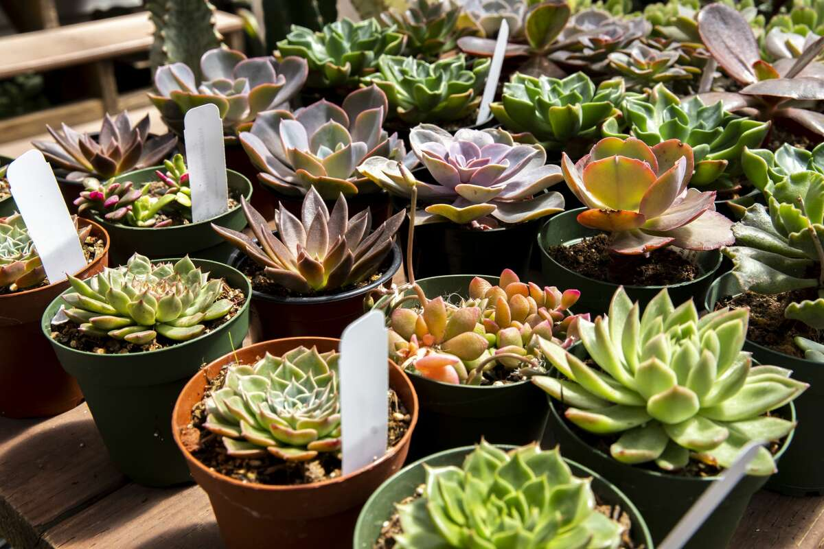 Succulents are among heat-tolerant and water-wise garden options.
