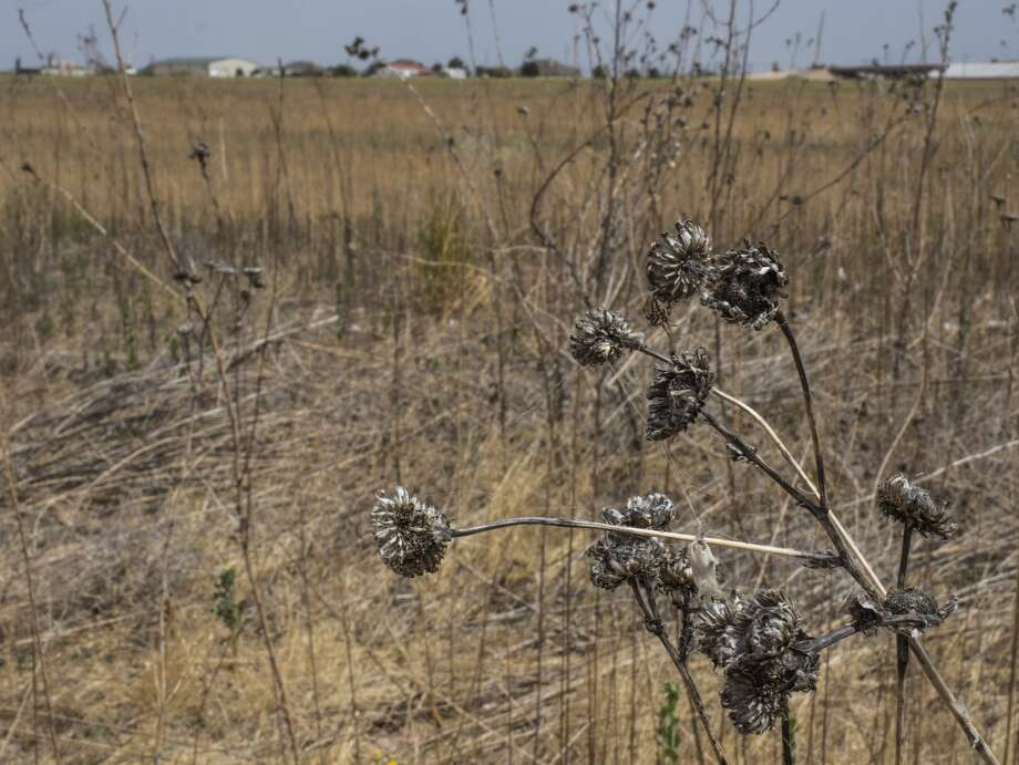Dry conditions and hot wind are making Midland County prime conditions for grass fires 07/20/2020. Tim Fischer/Reporter-Telegram Photo: Tim Fischer/Midland Reporter-Telegram