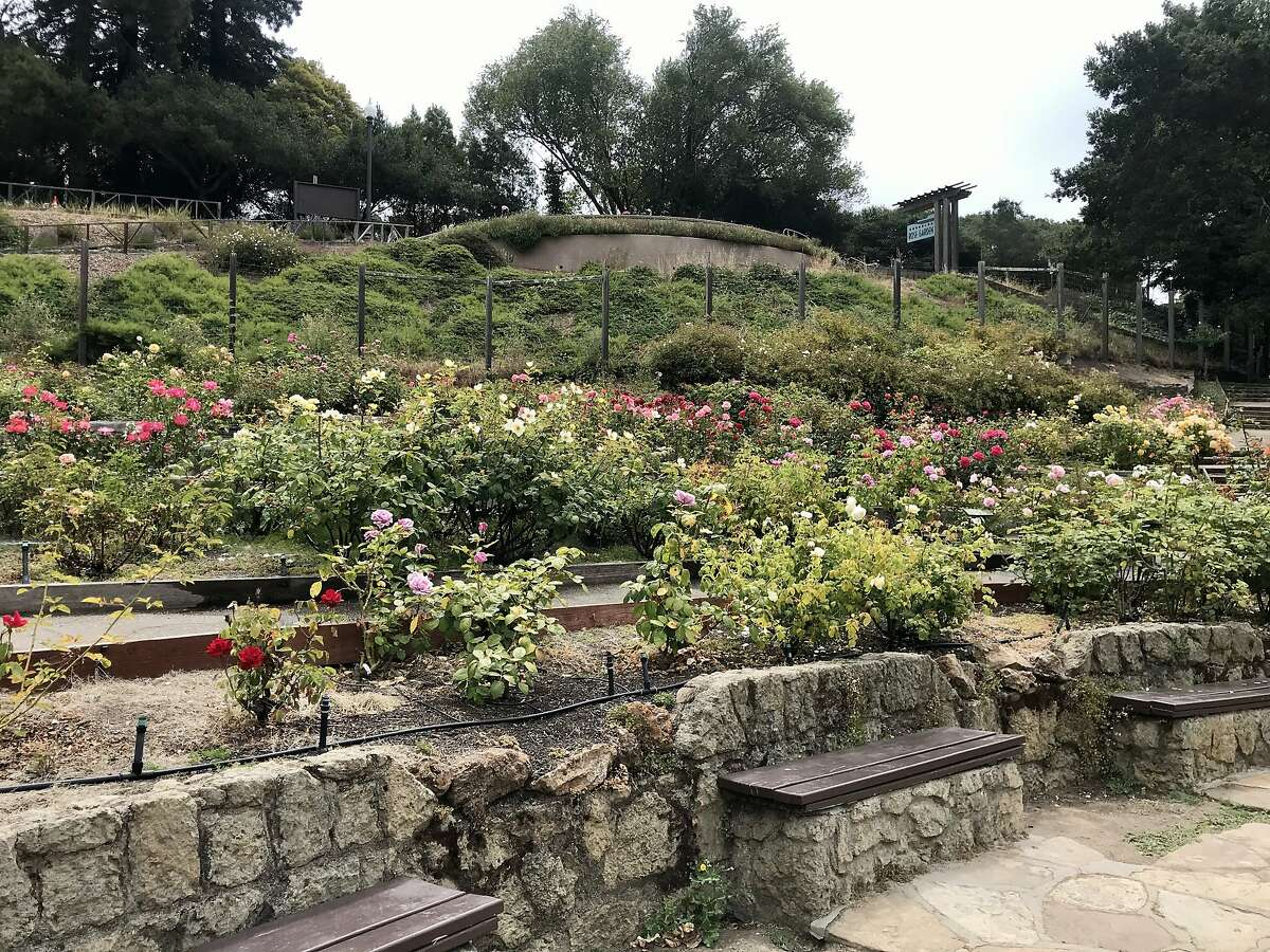 The Berkeley Rose Garden was built in the 1930s with funding from the Works Progress Administration.