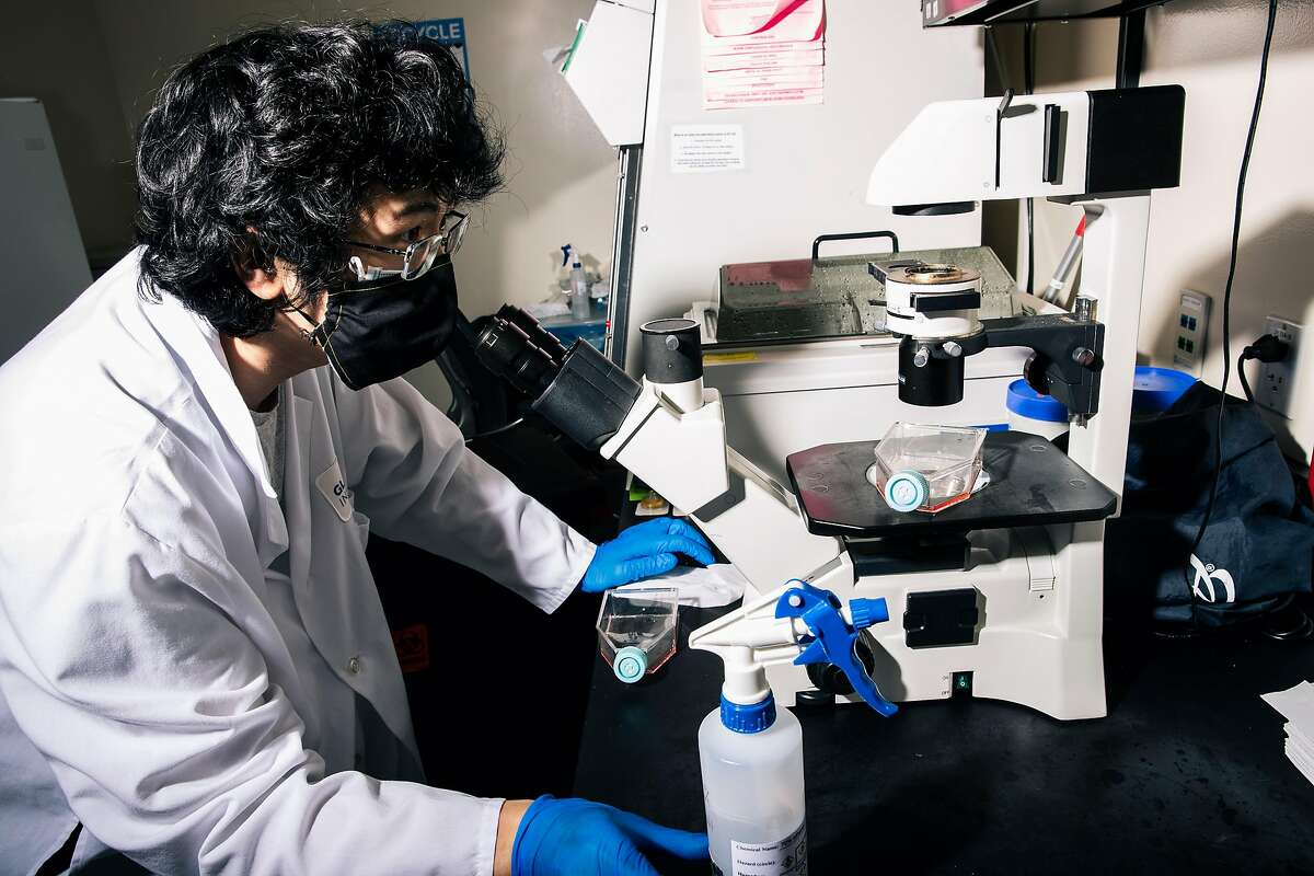 Gary Chan, a staff research associate at the UCSF Quantitative Biosciences Institute, checks a tissue culture flask with a microscope in a tissue culture room at the Krogan Lab inside the UCSF-affiliated Gladstone Institute on Wednesday, July 15, 2020 in San Francisco, Calif..