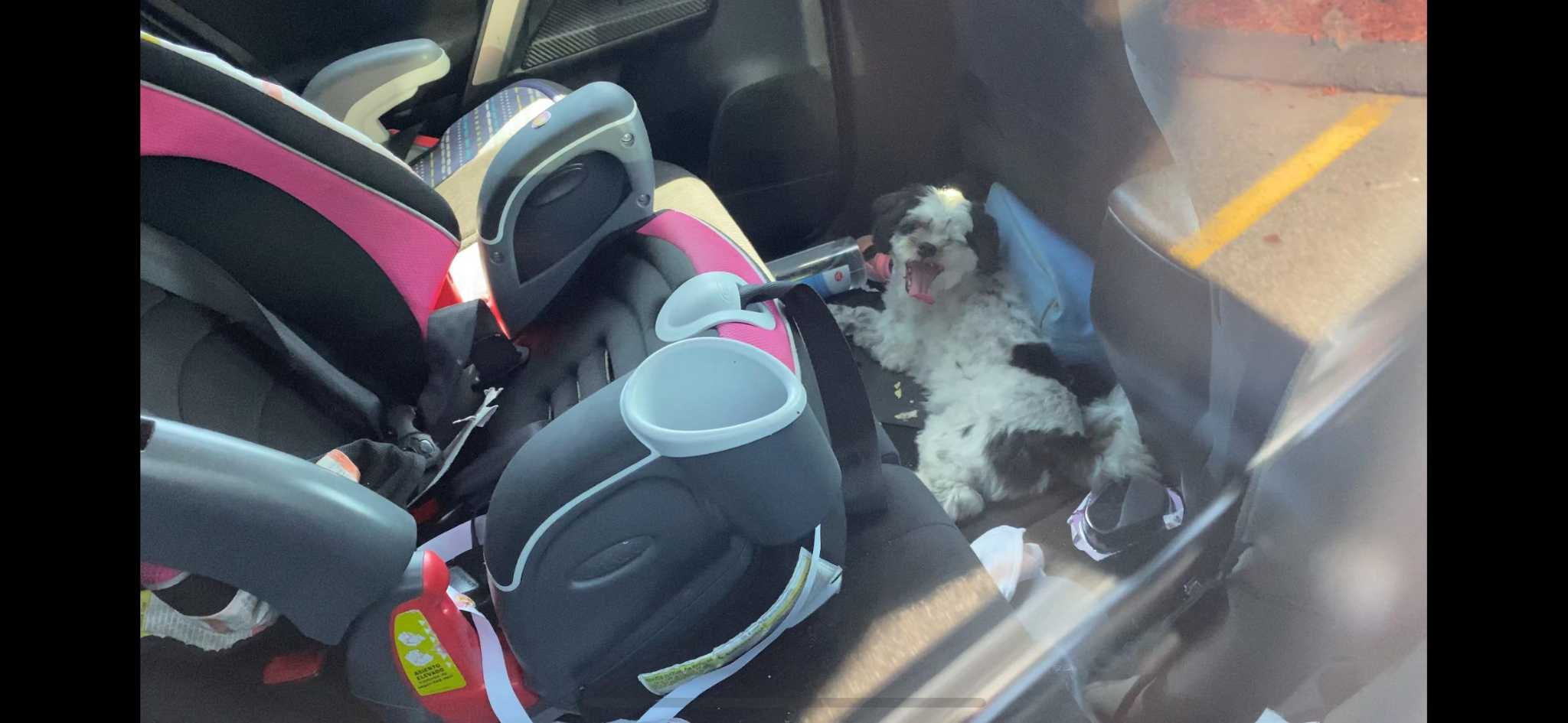 Police: CT man left dog in 102 degree car