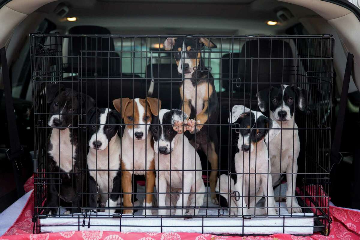 Homeless animals get a chance for a better life thanks to the volunteers at Rescued Pets Movement.