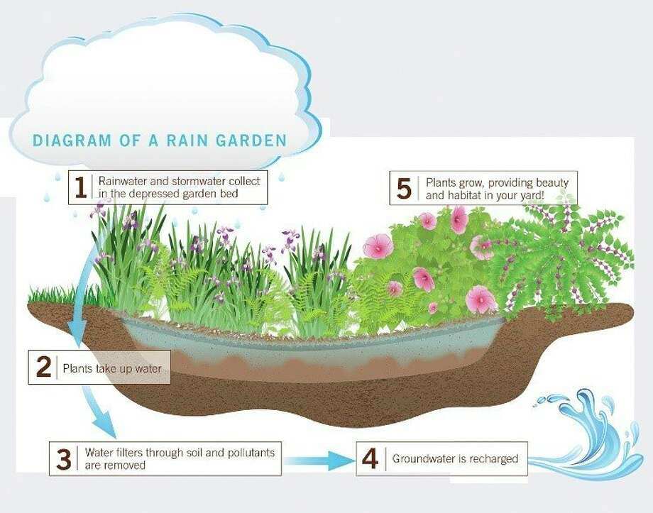 this diagram shows how a raingardenworks (Courtesy graphic/Clemson Cooperative Extension)