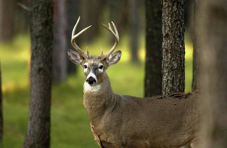 The Michigan Natural Resources Commission recently approved a new package of deer regulations at the commission's regular monthly meeting, (Courtesy Photo) / Copyright 2004 State of Michigan
