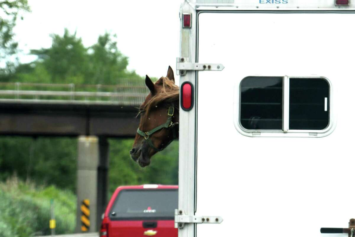 A horse is seen sticking its head out of a trailer while heading up up the Northway on Wednesday, July 22, 2020, in Northumberland, N.Y. (Will Waldron/Times Union)