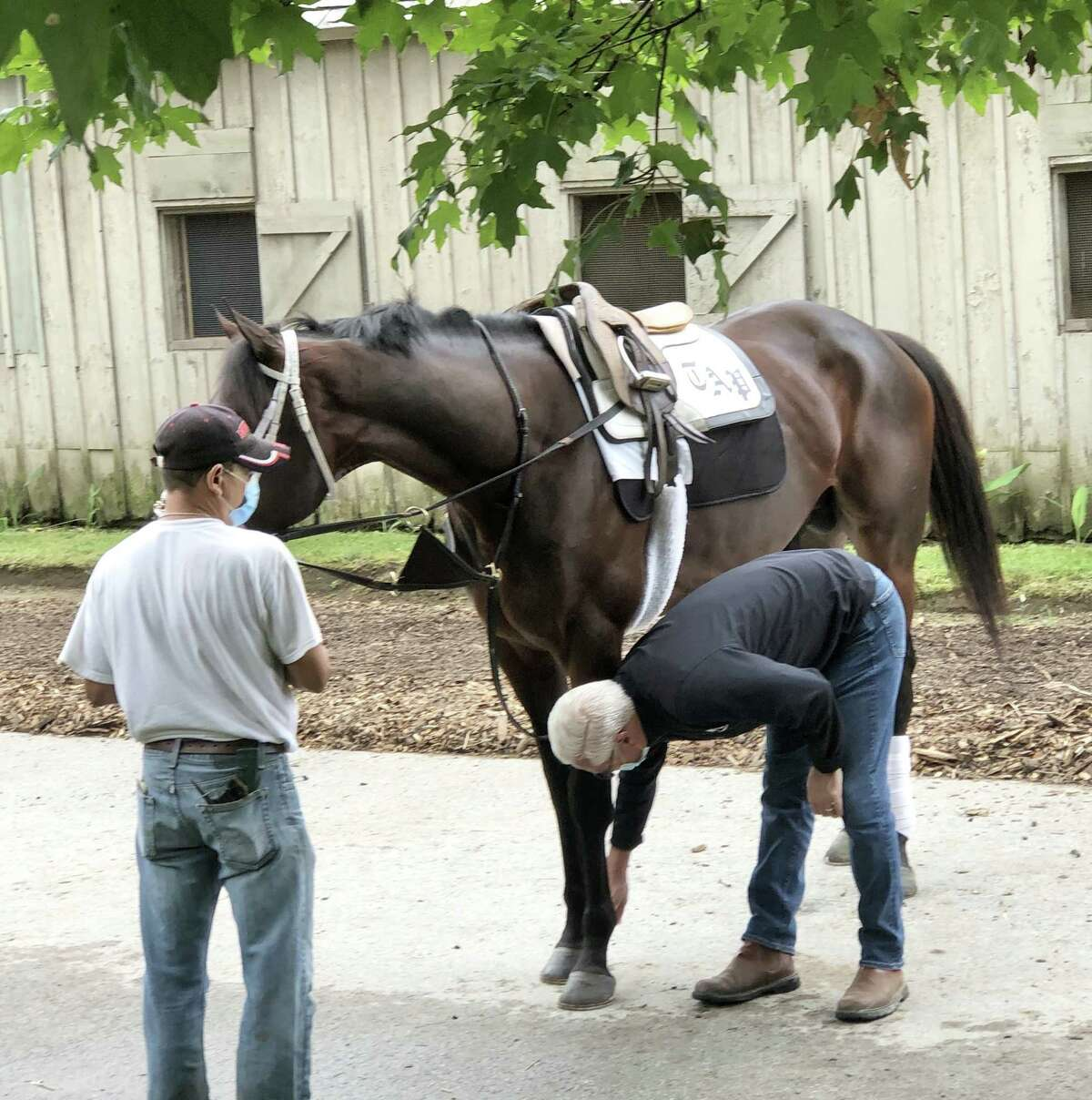 This is what trainer Todd Pletcher does every day. Before he sends any of his horses out to train or work, he checks their legs to make sure there is nothing wrong. That is what he is doing here. Before a set of horses left his barn on the Oklahoma Training Track on Wednesday morning, they all had to pass the Todd test. All of them did and off they went. Safety first, always. (Tim Wilkin / Times Union)