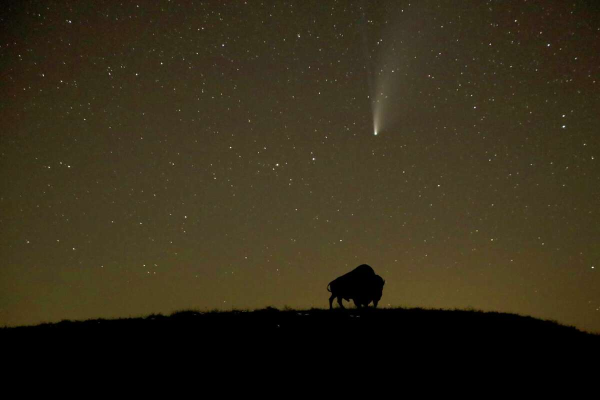 The Comet NEOWISE, which is about three miles in diameter, was just discovered four months ago. If it had been hurtling straight toward Earth, humans would have been unprepared and armed with largely untested deterrence techniques. The Comet Neowise is seen in the night sky beyond a cutout of a buffalo, Tuesday, July 21, 2020, on a hillside near Elmdale, Kan. The comet is expected to be visible from earth most of the rest of the month before continuing on its nearly 7,000 year orbit around the sun. (AP Photo/Charlie Riedel)