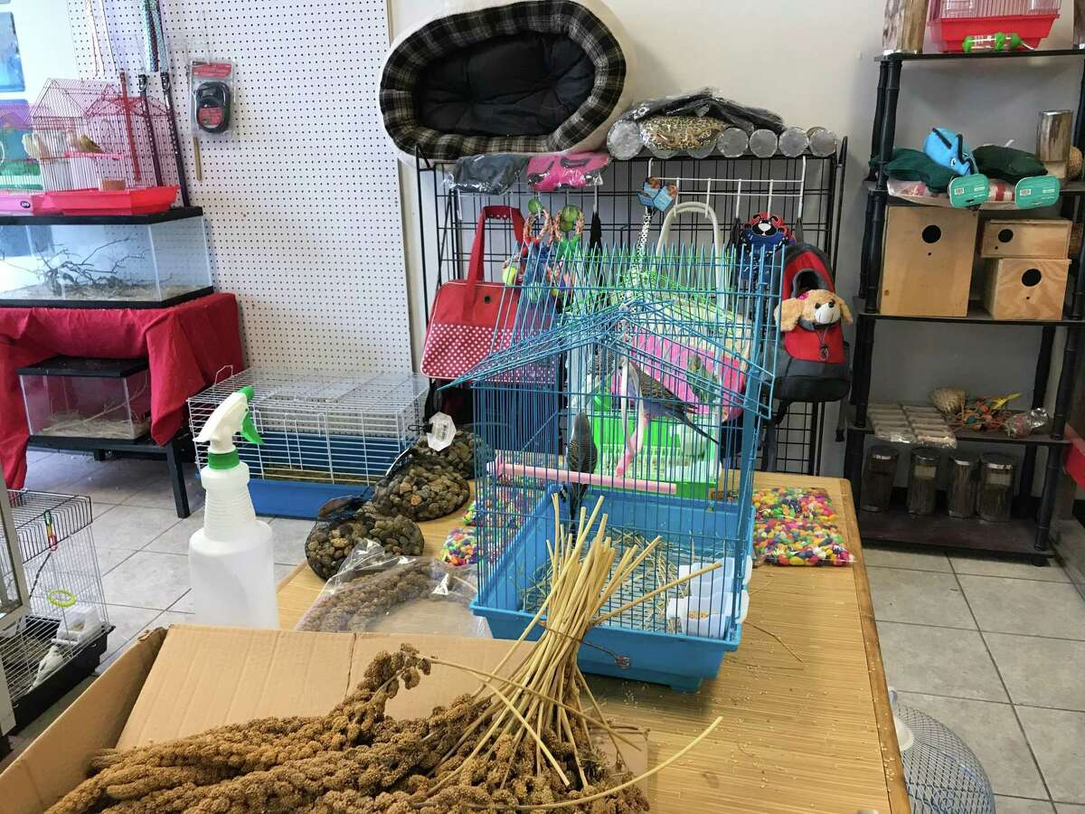 A pet shop in Spring had 60 animals seized by authorities following complaints.