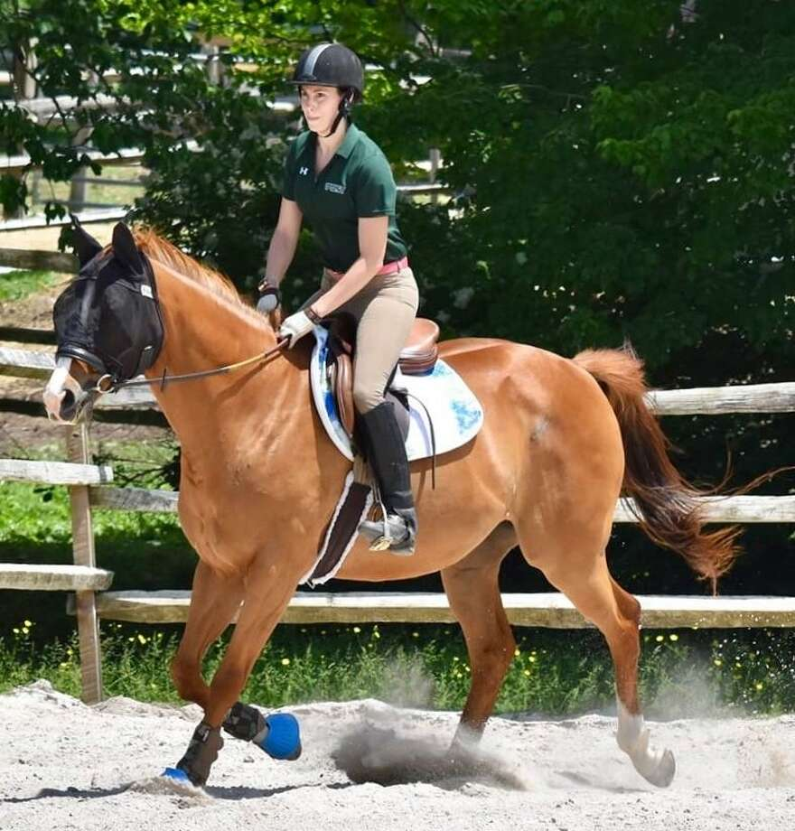 Gus is one of the many horses at H.O.R.S.E. of Connecticut available for sponsorship. Photo: Contributed Photo