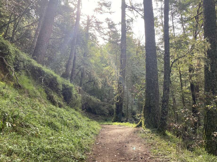 The El Corte Madera Creek Preserve is part of the MidPeninsula Regional Open Space, which was formed in 1972. Photo: Grant Marek/SFGate