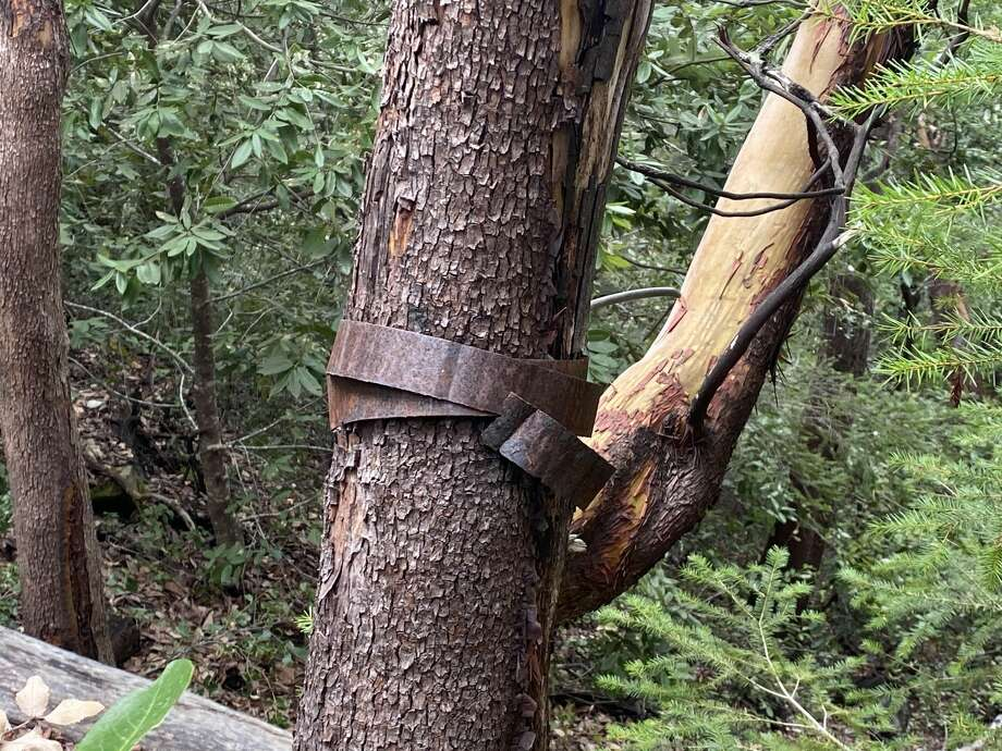 A piece of the crash snarled around a tree in the preserve. Photo: Grant Marek/SFGate