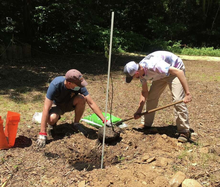 Oliver McGovern, 17, right, plants a chestnut seedling with his father Brian. Photo: Contributed Photo
