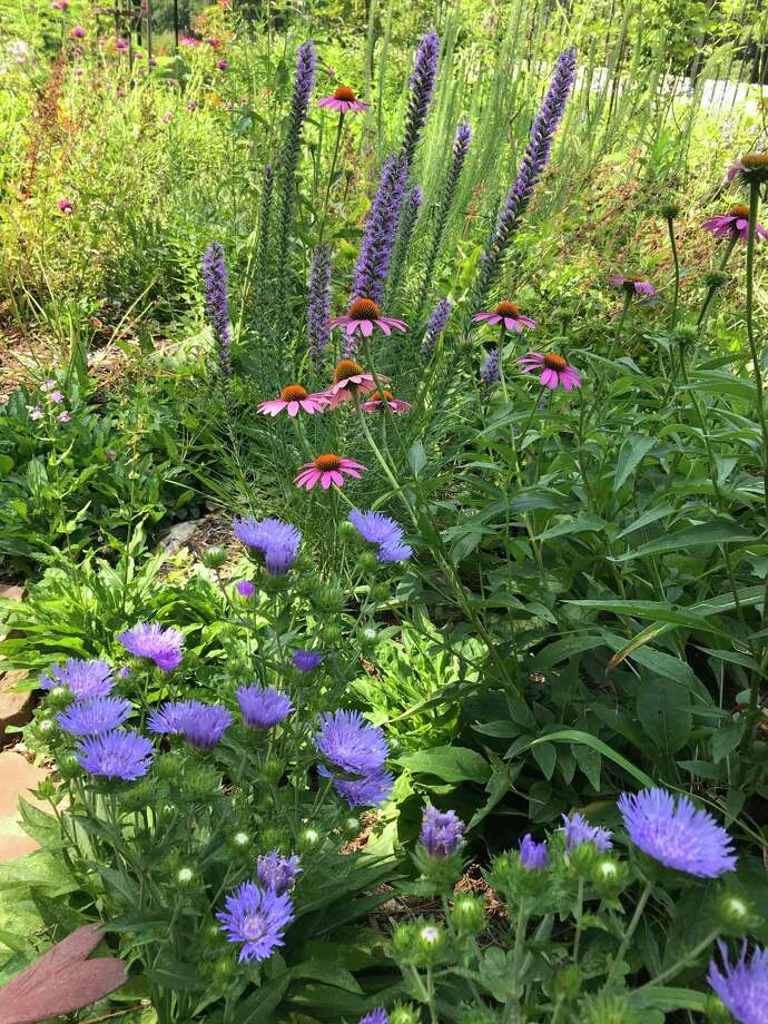 Consider planting a pocket prairie to replace that diseased lawn. No, you do not have to replace the whole lawn at once. Start small and keep expanding your prairie until the lawn is minimal. Photo: Photo By Linda Crum