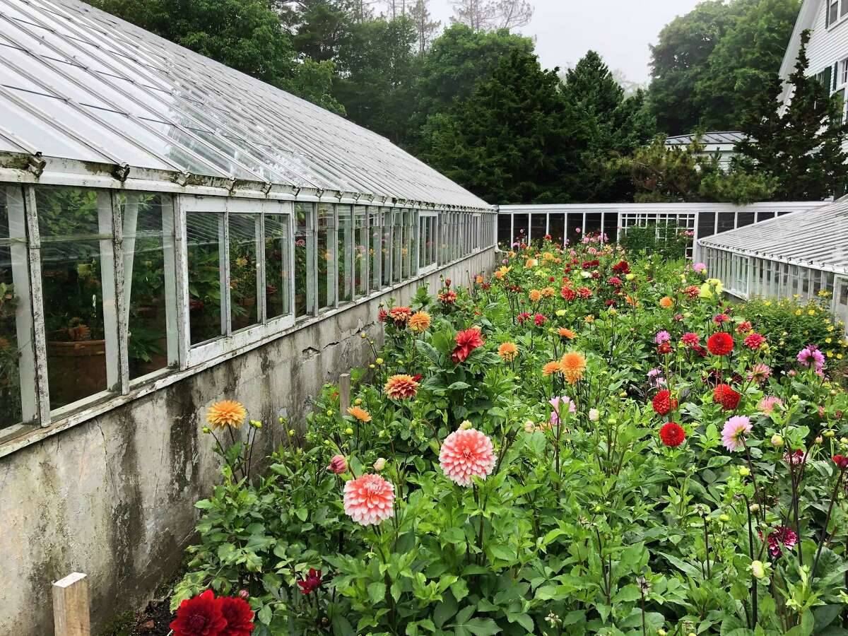 The dahlia display garden at Fuller Gardens was in full bloom during the author's visit.