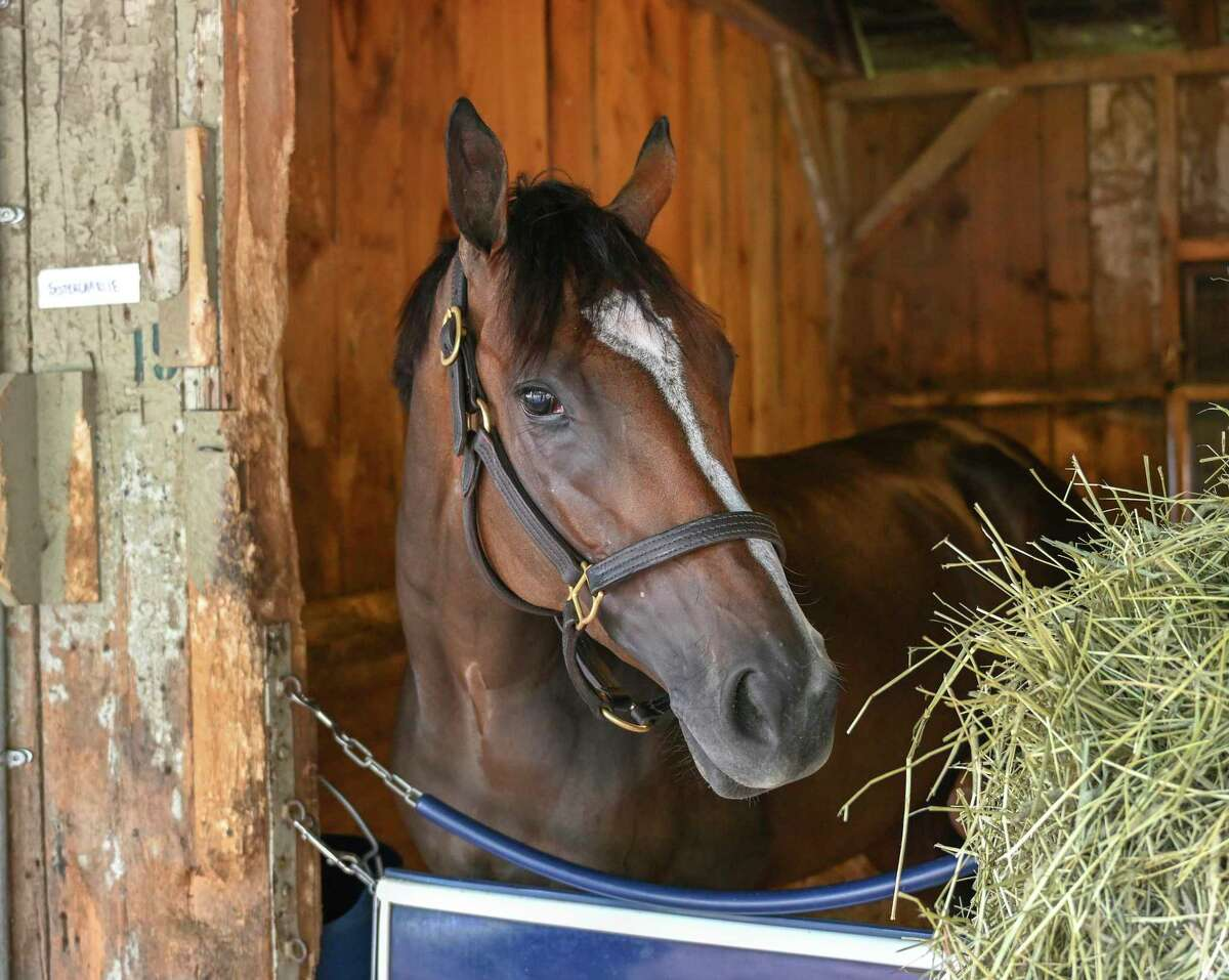 Sistercharlie stands in the stall in Chad Brown?•s Racing Stable Friday July 24, 2020 on the grounds of the Oklahoma Training Center adjacent to the Saratoga Race Course in Saratoga Springs, N.Y. Photo by Skip Dickstein/Special to the Times Union.