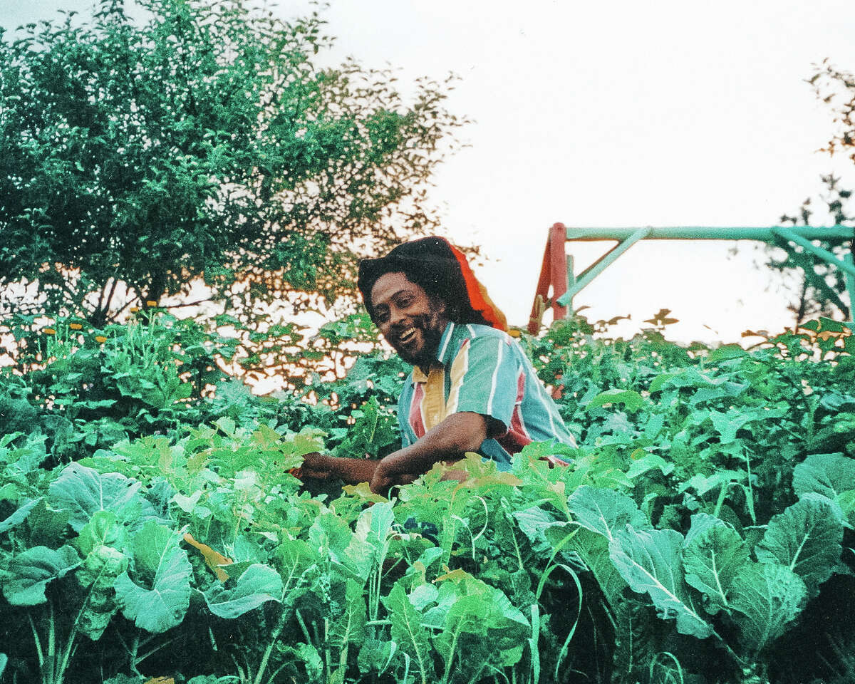 The author's father, Ahmad-Malik, harvesting greens from the family garden in Vermont.