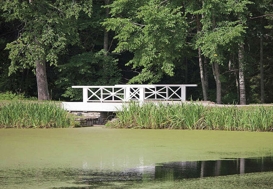 Algae problems occur when an overabundance of nutrients enter a pond. Photo: Getty Images