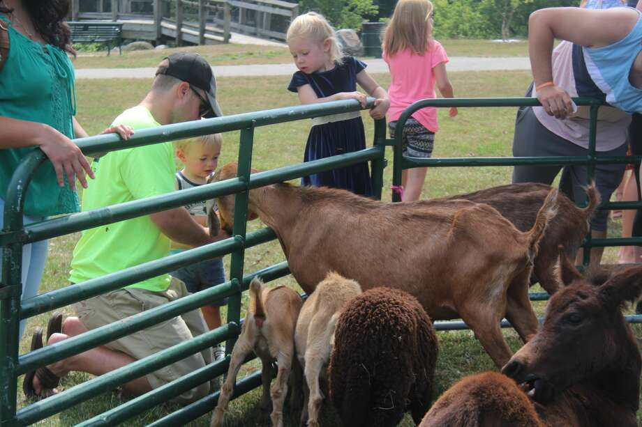 Families gathered at Hemlock Park Saturday for the chance to pet and feed farm animals, go for pony rides and play games at the annual Petting Zoo and Family Picnic. The annual event was hosted by the Mecosta Osceola Substance Awareness Coalition in an effort to bring awareness to substance abuse issues while also offering family-friendly entertainment to locals. Photo: (Pioneer Photos/Catherine Sweeney)