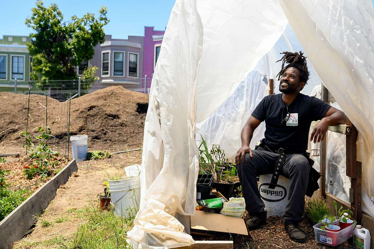 """Isaiah Powell, 44, poses in the greenhouse at at Loyal to the Soil, a Bayview urban farm he started this past spring on Friday, July 17, 2020 in San Francisco, Calif. The new garden is next door to the Florence Fang Asian Community Garden and the two groups of farmers have developed friendships and help one another out. Isaiah Powell and his partner Danielle Fernandez started the 1/4 acre garden this past spring to make fresh produce accessible to those in the community. """"People who have been marginalized and don't have access, don't they deserve nice things, too?"""" asks Powell. Inspired by the Ramaytush Ohlone, the indigenous people of San Francisco, Powell is of the mindset that """"we should be stewards of the land, not owners of the land."""""""