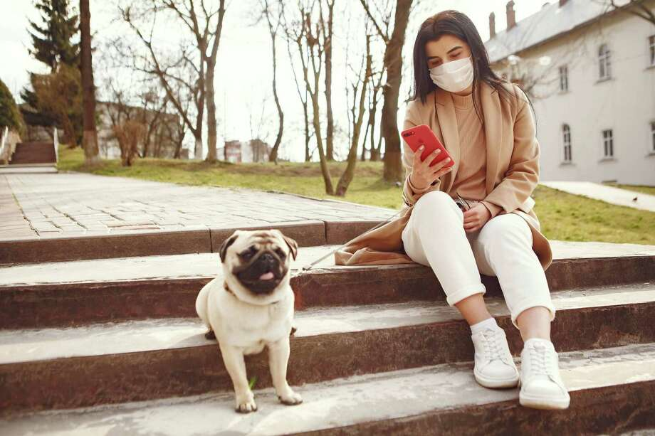Pet owners need to maintain the highest standards when it comes to keeping their pets healthy, especially during a pandemic. Photo: Texas A&M University
