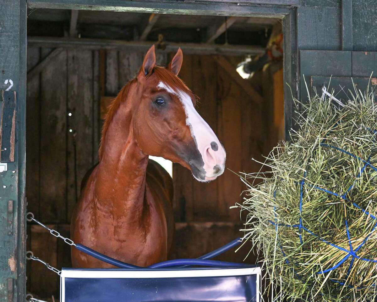 Improbable, co-second favorite for Saturday's Whitney, trained by Bob Baffert stands quietly in his stall and gets a good look at the barn area of Saratoga Race Course on Wednesday, July 29, 2020, in Saratoga Springs, N.Y. Photo by Skip Dickstein / Special to the Times Union