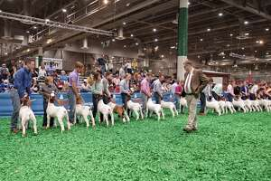Houston Livestock Show and Rodeo officials announced that more than 10,000 junior exhibitors who were affected by the event's early closure would be receiving premiums in their respective categories.