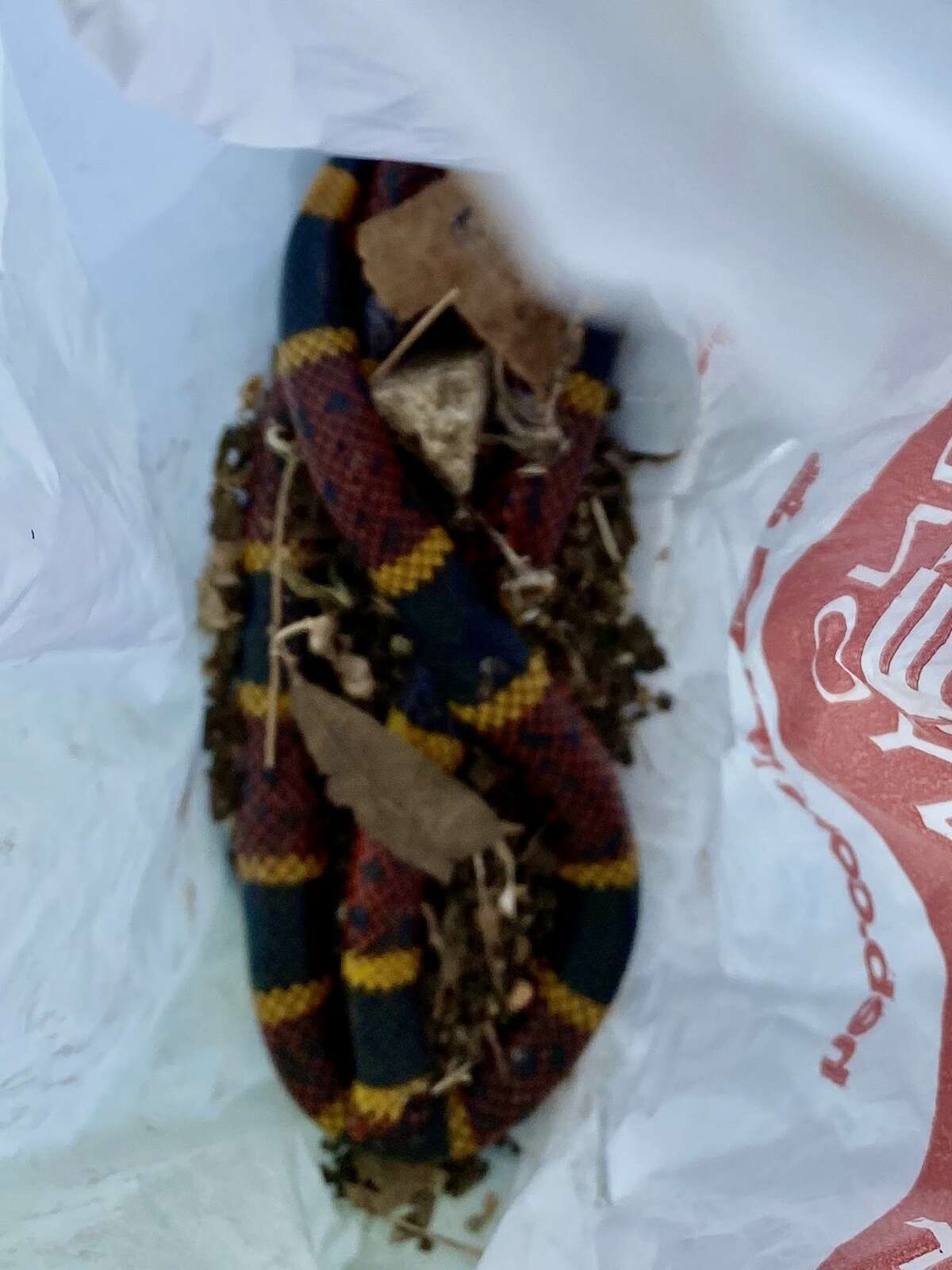 When Gloria St. Mary returned from a trip to the grocery store last Thursday, she noticed her dog named King Kong was playing with something in his mouth. After stepping closer, she realized it was a coral snake and screamed. Inside the bag in the photo, is the dead snake the dog had in his mouth.