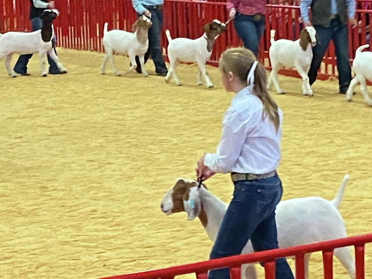 Reagan Crick walks her goat in the ring during the 2020 the San Antonio Stock Show & Rodeo.