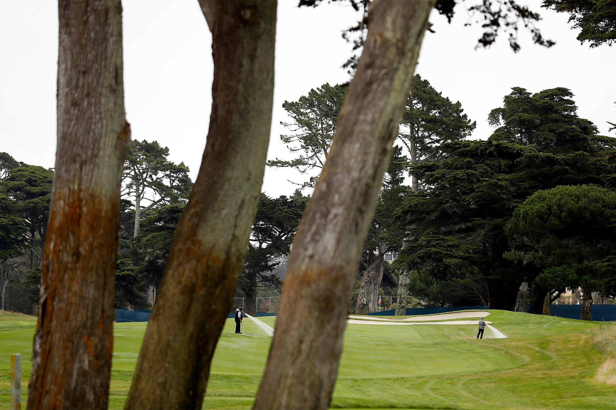 Harding Park poised to host PGA Championship - with thin fairways and thick rough
