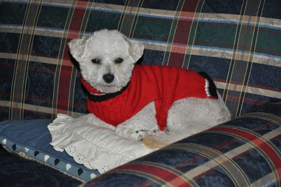 Muffin age approximately 13.5 years, died May 4, 2020 due to bee attack. Photo: Courtesy Photo