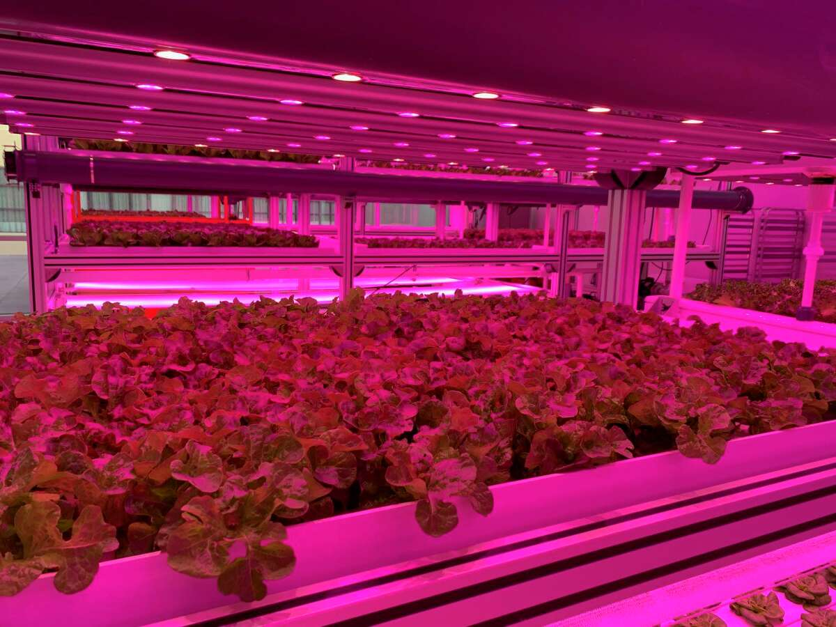 Kalera usescleanroom technology and processes to eliminate the use of chemicals at its vertical farms. The Orlando-based company says its lettucesconsume 95 percent less water compared to field farming.