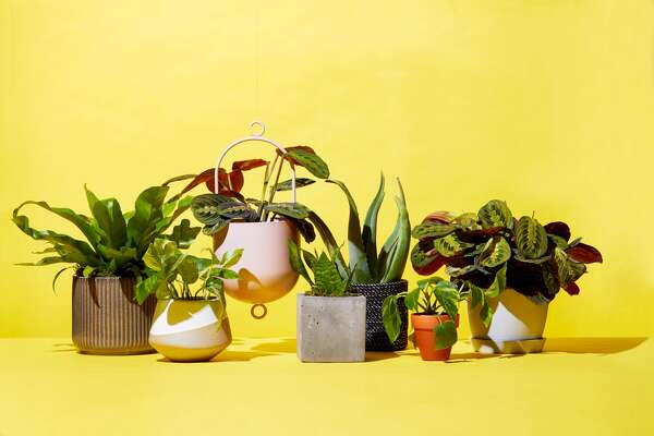 There's a reason Bobby Berk fills every home on Queer Eye with plants: They add life to any room, purify your air, and boost your mood. Updating your house with greenery is also easier than ever thanks to new online plant delivery services. Yep, it's now possible to send living plants through the mail and have them arrive intact (and thriving!) on your doorstep a few days or even hours later. While you can always go to your local nursery for recommendations, online stores offer more variety than ever before, not to mention subscription services so you can receive new décor on the reg. To find out which suppliers have honed the art of growing, packing, and shipping plants, we ordered houseplants from the most popular brands in the game right now, including superstores like Amazon, florists such as UrbanStems, and houseplant-focused companies like The Sill and Bloomscape. Before you buy any plant, you'll want to consider which types fits your lifestyle. If you're prone to overwatering, get a species that can survive frequent dousing, like Chinese evergreens or peace lilies. If you're more of a leave-it-and forget type, go with drought-resistant succulents or aloe. Pothos, prayer plants, and spider plants also top many horticulturists' lists of hard-to-kill favorites. Ready to get gardening? Find out the absolute best places to order plants below: