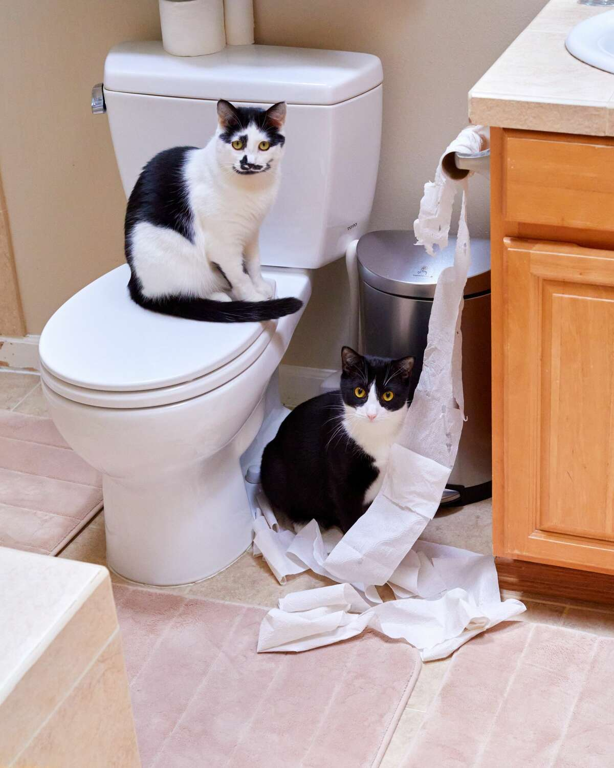 Uh, the dog did it. A homeowner in Edmonds, Wash., discovers why her family keeps running out of toilet paper.