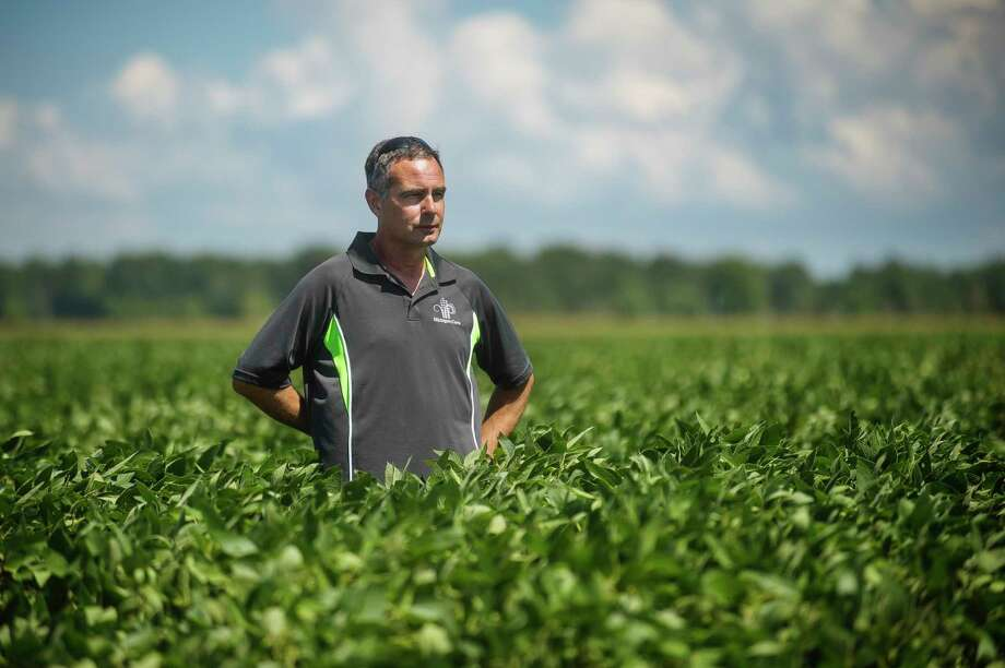John Burk stands in a soybean field on his family's farm Friday near Auburn. The Burk family tends to 2,500 acres of corn, soybeans, navy beans and sugar beets. For more photos, turn to page 3A. (Katy Kildee/kkildee@mdn.net)
