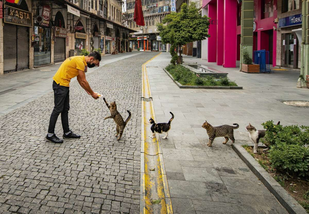 Put out your paw: Well-behaved cats line up for free food in Turkey.