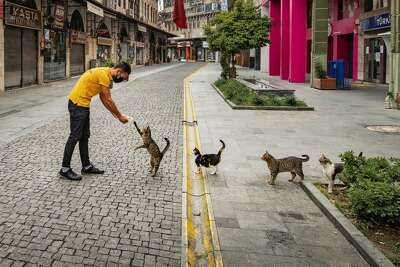 The Comedy Pet Photography Awards 2020 Mehmet Aslan Hatay Turkey Phone: Email: Title: social distance meal order Description: During the corona days, social distance meal order in curfew Animal: Cat Location of shot: Turkey. The Mars Petcare Comedy Pet Photo Awards 2020 contest is offering £3,000 ($3,924) prize and the title of its Pet Photographer of the Year to the animal lover who submits the funniest pet photo. Entries are being accepted through Aug. 31.