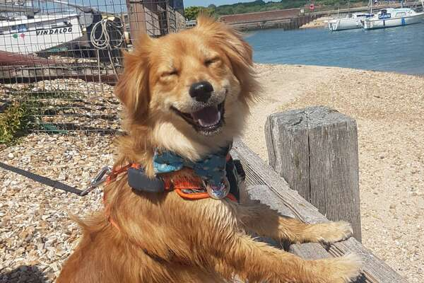 The Comedy Pet Photography Awards 2020 Dean Pollard Fareham United Kingdom Phone: Email: Title: Super Happy Dog Description: Taz, our rescue dog from Cyprus was super happy on a sunny day and clearly delighted to be at the beach. Animal: Dog Location of shot: Hill Head Beach