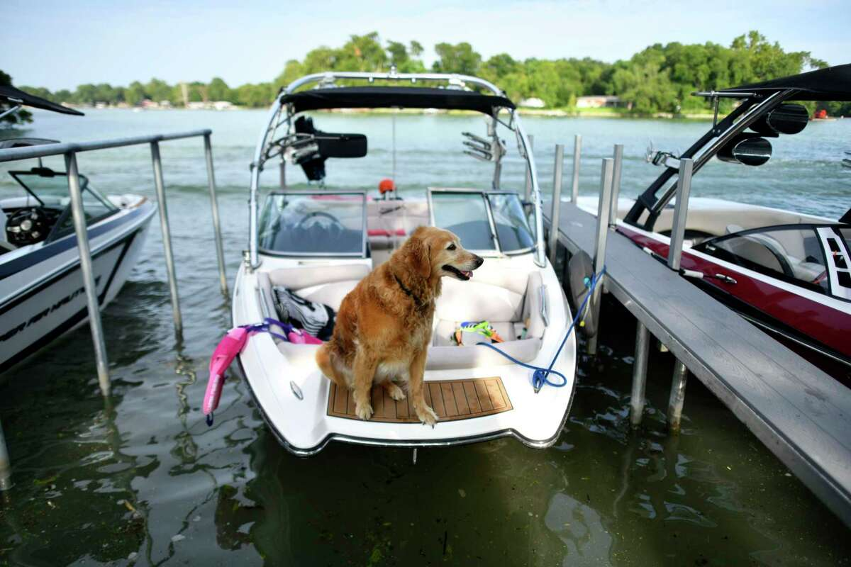 A dog relaxes in a boat on Lake McQueeney on Friday, June 21, 2019. The Guadalupe-Blanco River Authority has extended the restricted zone near the dam that form Lake McQueeney after the Lake Dunlap dam failed on May 14.