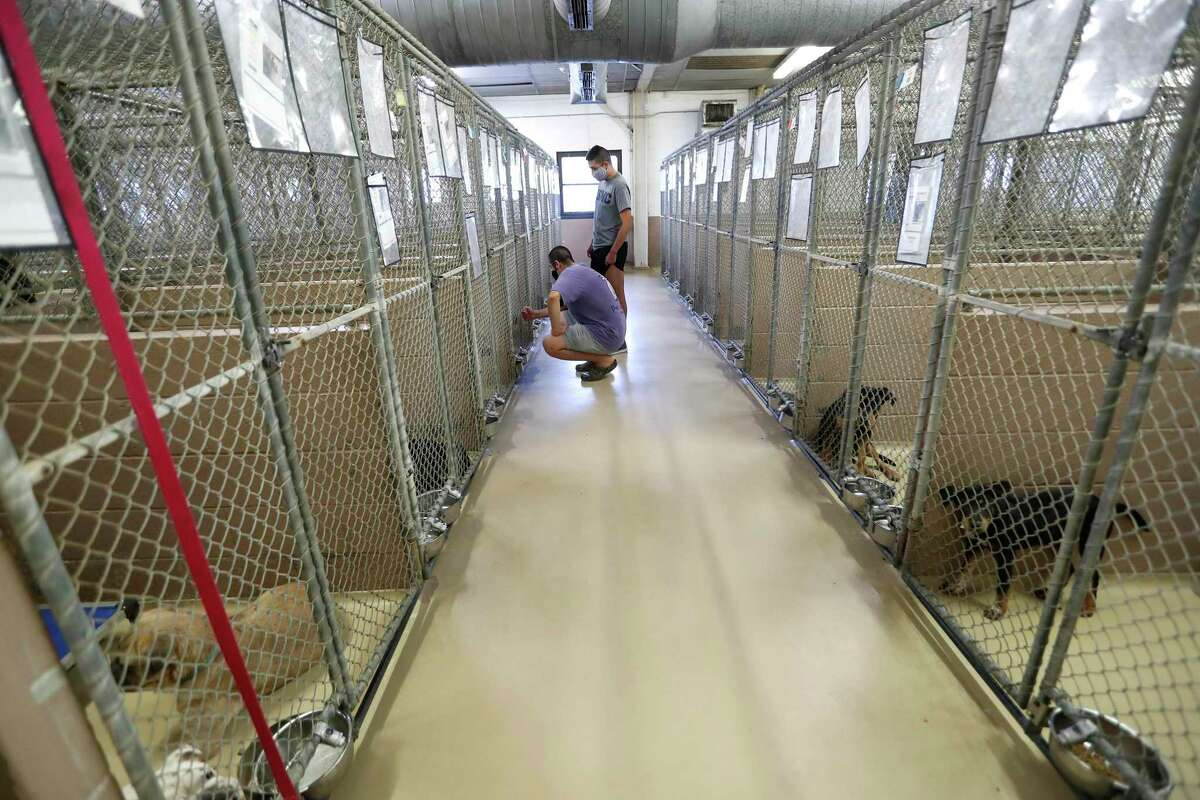 Fernando Rocha and Juan Garcia look for a dog to adopt in the kennel area at Harris County Pets, Friday, July 31, 2020, in Houston.