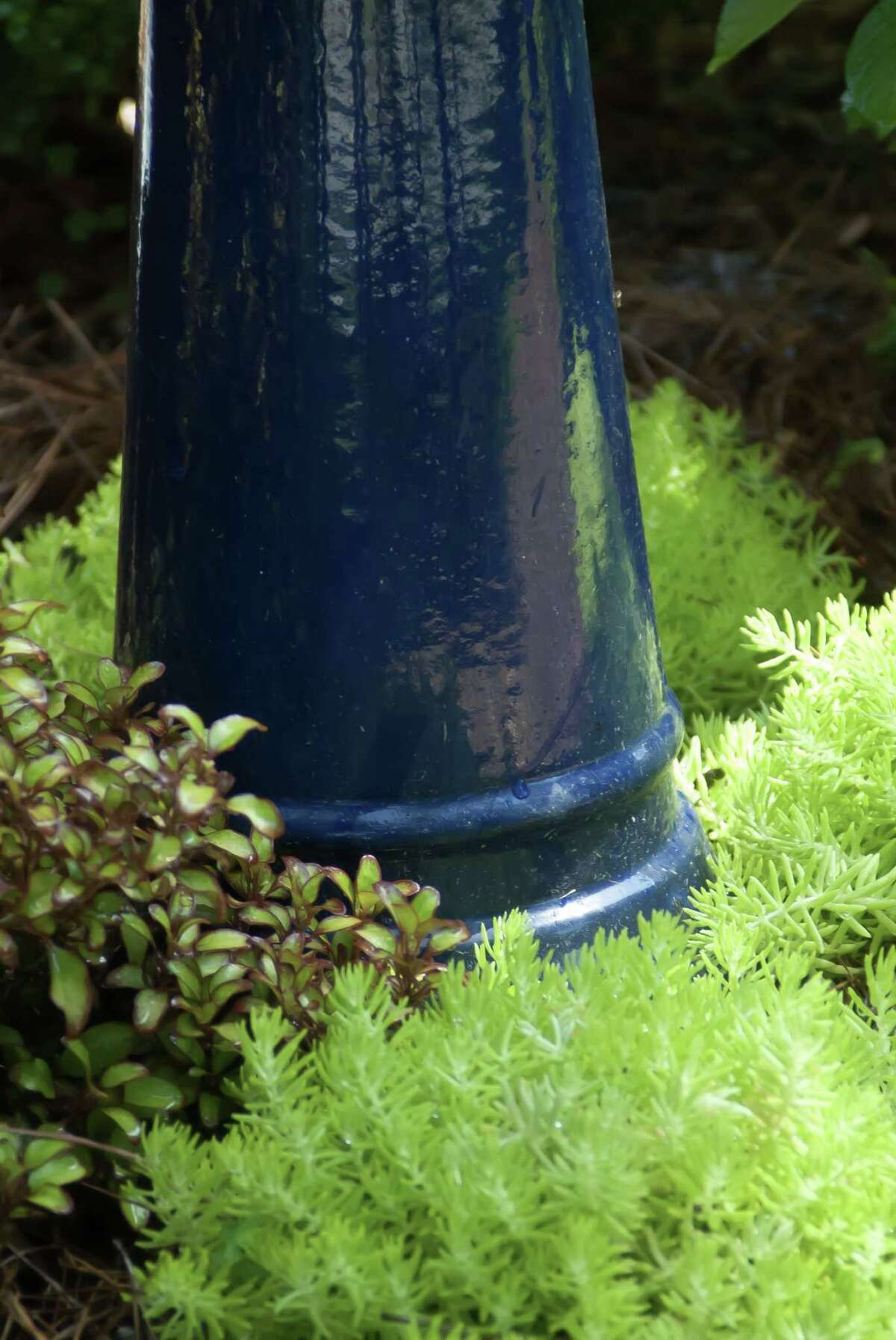 Lemon Coral sedum and Waxwing Orange mirror bush dazzle in partnership with blue glazed bird bath. (Norman Winter/TNS)