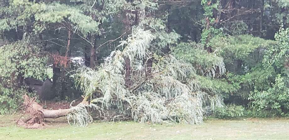 Norfolk police said the couple retreated to their basement during the heaviest winds and emerged to find several trees down on their property. Photo: / Norfolk Police Department