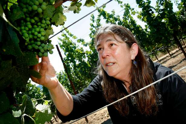 Winemaker Milla Handley likes to walk through the Gewurztraminer vineyards looking at the growth of the grapes which turn pink later in the season. Milla Handley is the winemaker for Hanley Cellars off highway 128 in the Anderson Valley of Mendocino County.