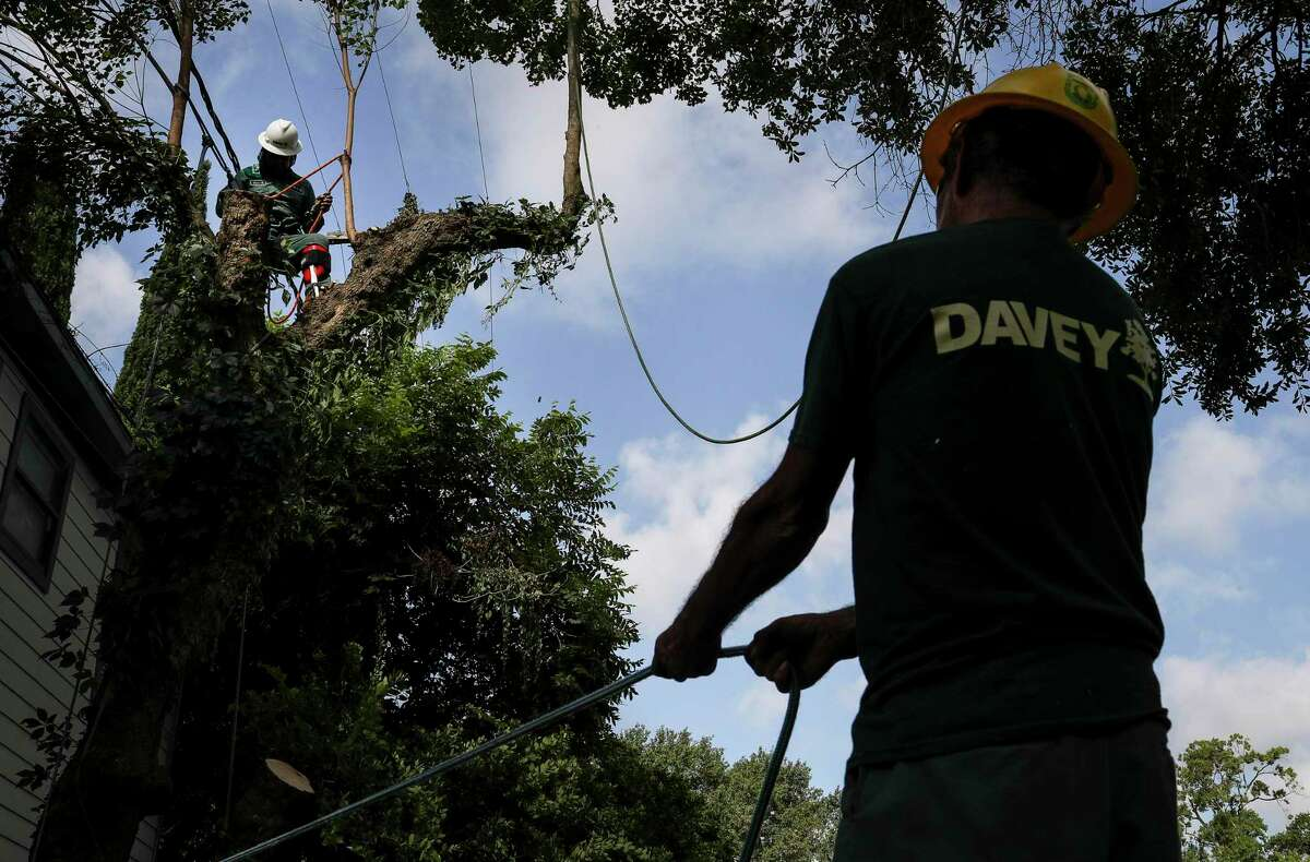 Teodulfo Garcia, right, and Juan Estrada work to bring down a tallow tree Friday, July 31, 2020, in the Tanglewood neighborhood in Houston.